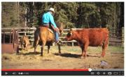 Watch Hugh and Lucky the Wonder Horse in this new video for Tourism Kamloops!